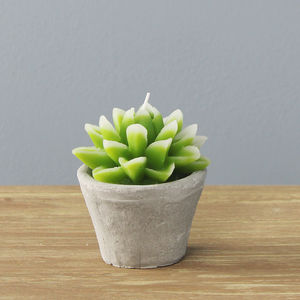 Aloe Candle In Concrete Pot
