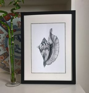 Framed Limited Edition Conch Shell Giclee Print