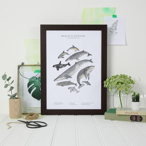 Whales And Dolphins Watercolour Print