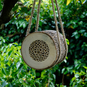 Natural Wood Bee Log