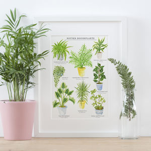 House Plants Illustrated Giclée Print - drawings & illustrations