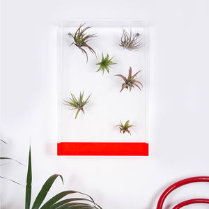 Airbox Neon Red Glass Effect Plant Display - home accessories