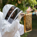 Urban Beekeeping And Craft Beer Experience For One 2018