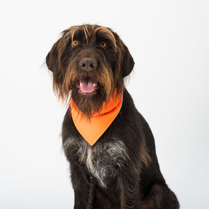 Cooling Dog Bandana - dogs