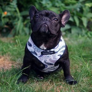 Liberty London Cotton Soft Dog Harness - dogs