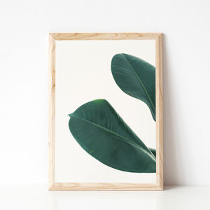 Rubber Fig Leaves I Photographic Print