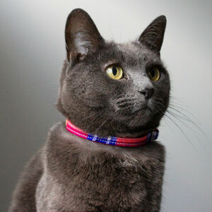 Shuka Red Or Blue Cat Collar