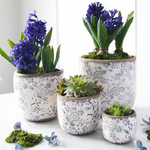 Blue And White Round Floral Pot With Hyacinth Bulbs - new in garden