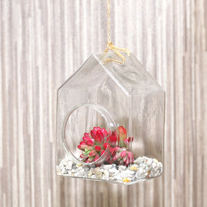 Hanging Glass House Terrarium - flowers & plants