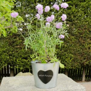Sale Zinc Heart Chalkboard Planter Pot