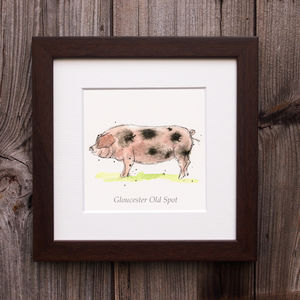 Limited Edition Pig Print. Gloucester Old Spot