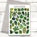 Tree Leaves Of Britain Art Blank Greeting Card