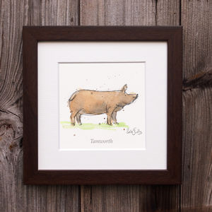 Limited Edition Pig Print. Tamworth