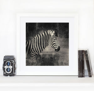 Zebra Black And White Print - new in prints & art