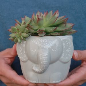 Grey Elephant Planter With A Succulent