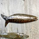 Garden Fish Wall Art