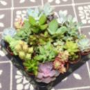 Hexagon Mini Planter Choice Of Succulent Or Cacti