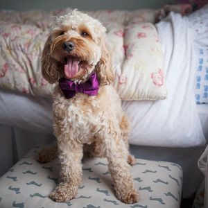 Party Luxe Velvet Dog Bow Ties - pet-lover