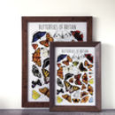 Butterflies Of Britain Wildlife Collection Print