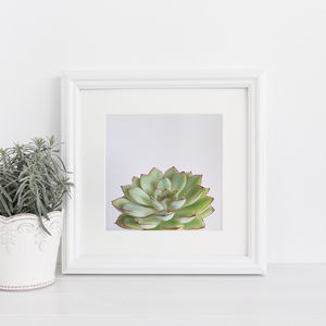 Green Succulent Botanical Photographic Print - nature & landscape