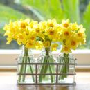 Spring Sunshine Narcissi Fresh Flower Bottles