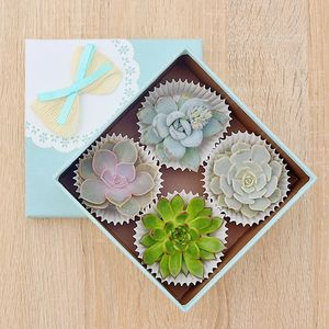 Succulents House Plant Gift Box