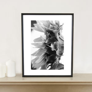 Sunflower I, Bungay, Suffolk, Art Print - photography & portraits