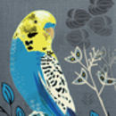 Budgie Greetings Card
