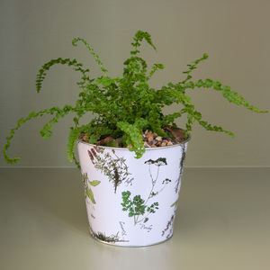Planted Botanical Pattern Flower Pot - flowers, plants & vases