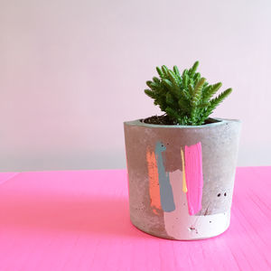 Bon Concrete Pot With Succulent Plant - garden