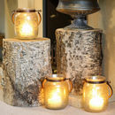 Birch Bark Tree Stumps