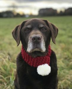 Hand Knitted And Personalised Christmas Dog Scarf - dogs