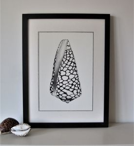 Limited Edition Marble Cone Shell Giclee Print - canvas prints & art
