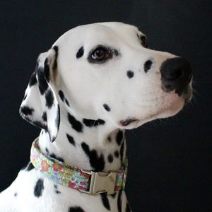 Chloe Liberty Dog Collar - pet collars