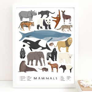 Mammals Print - gifts for children