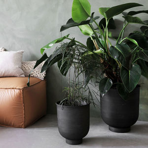 Set Of Two Iron Planters - the greenhouse edit