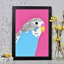 Blue Budgie Bird Portrait Print