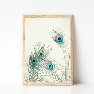 All Eyes Are On You Photographic Peacock Feather Print - still life