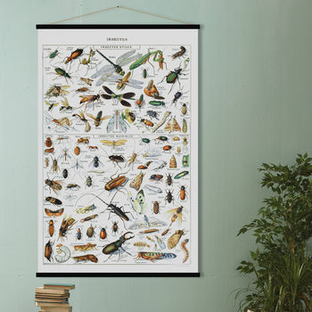 Insects Print In French