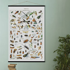 Insects Print In French - vintage botanics