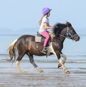 Child's Beach Horse Riding Experience - experiences
