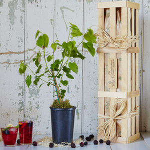 The Mulberry Tree Gift - new gifts for him