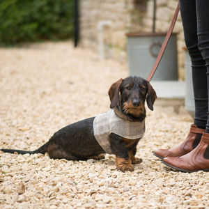 Luxury Tweed Dog Harness - pet leads & harnesses