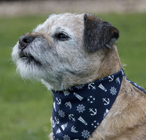 Dog Neckerchief - clothes & accessories
