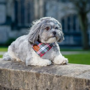 Bloombury Luxury Dog Bandana Neckerchief