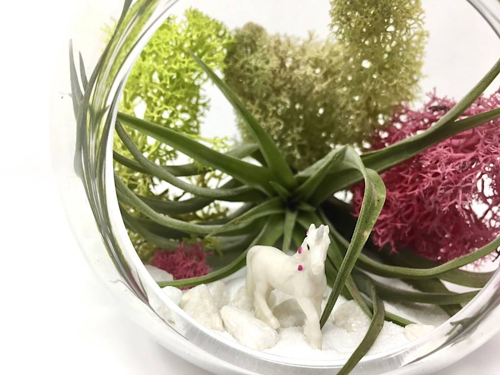 Unicorn Air Plant Terrarium Kit By House Of Moss