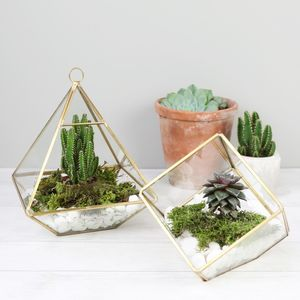 Geometric Terrarium - plants & trees