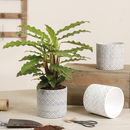 Geometric Plant Pot Collection