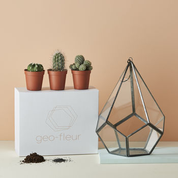 D.I.Y Plant Your Own Terrarium Kit