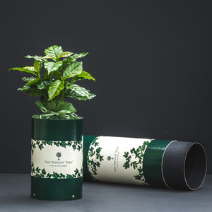 Coffee Tree Gift - flowers, plants & vases